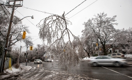 Cars drive by a fallen tree limb hanging from a power line following an ice storm in Toronto