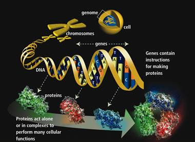 Epigenetica2