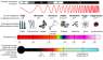 680px-EM_Spectrum_Properties_it.svg