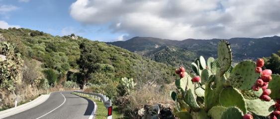 Sardegna-Strada-per-Olzai-61