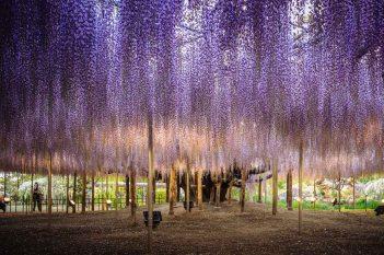 2015_05_avatar_tree-006