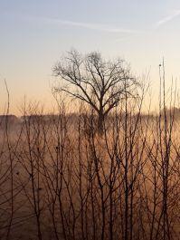 La campagna con la nebbia una mattina d'inverno..