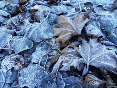 Le foglie sui prati congelati..
